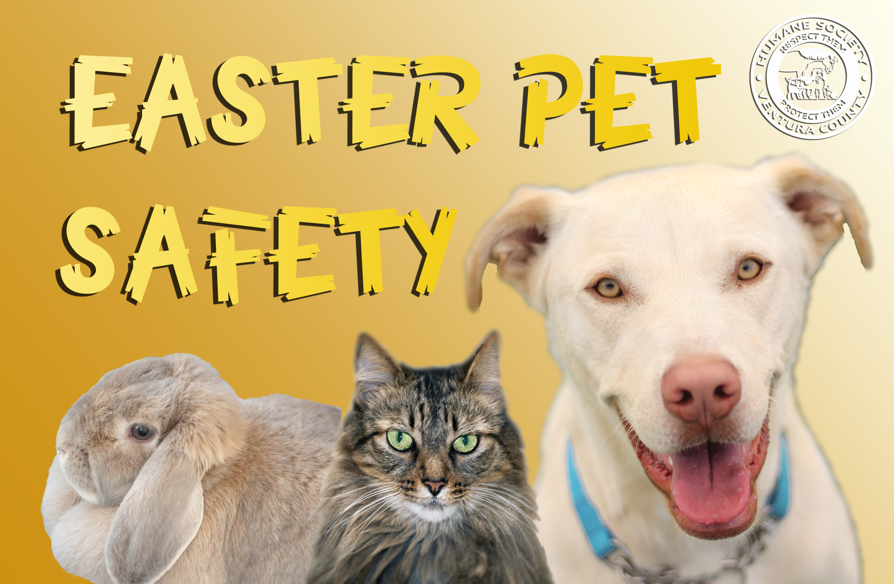 easter.pet.safety.jpg