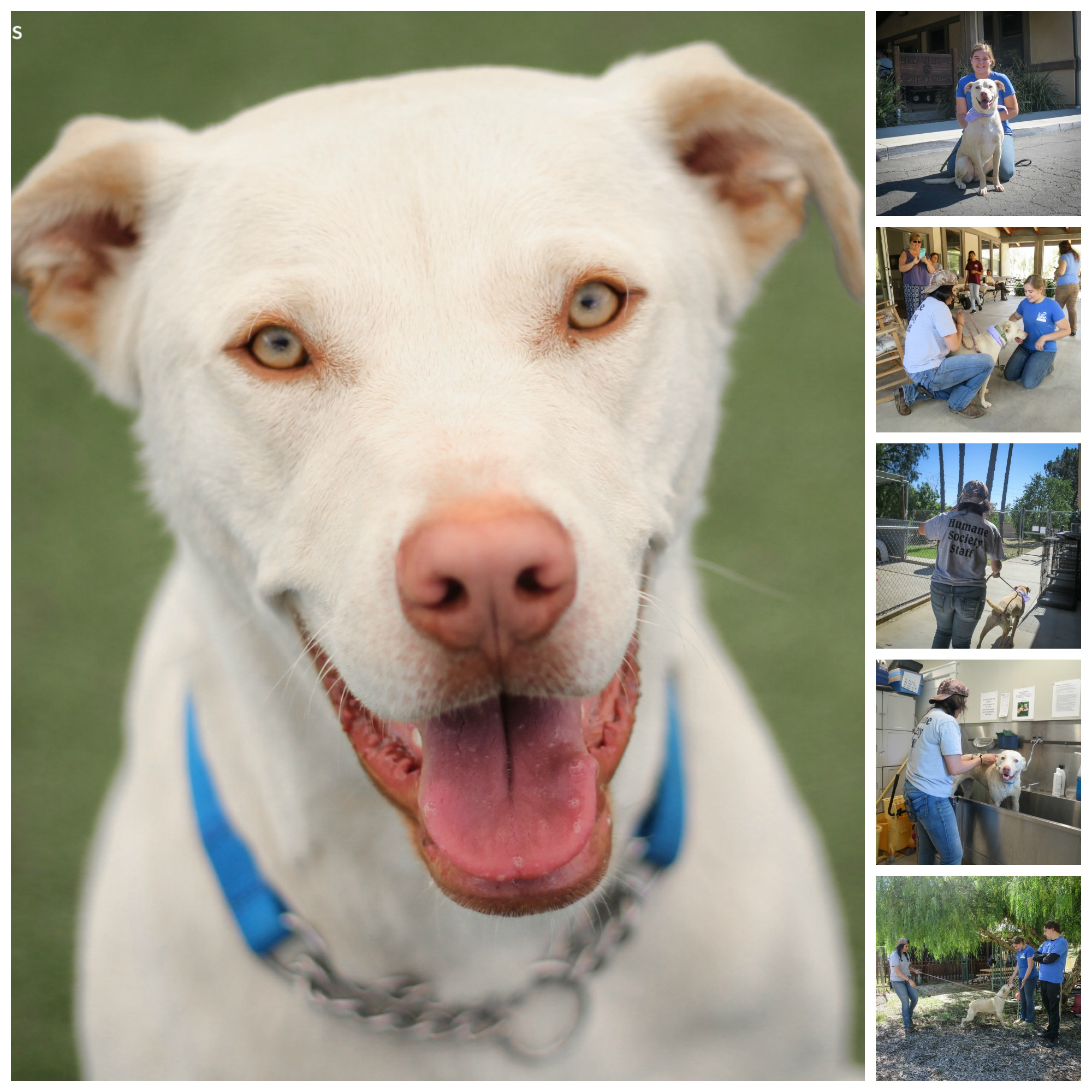 dallas.adopt.collage.jpg