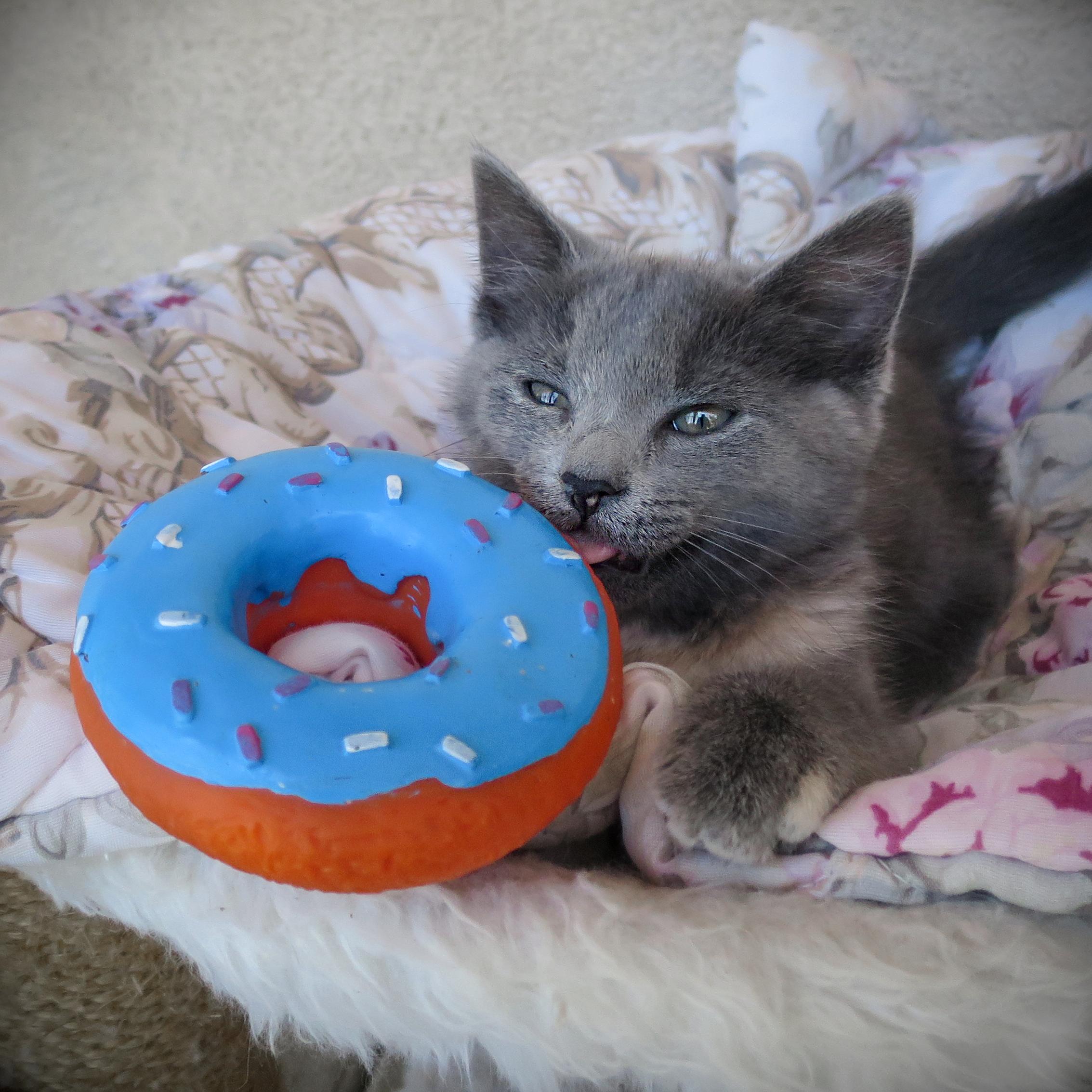 donut.day.jpg