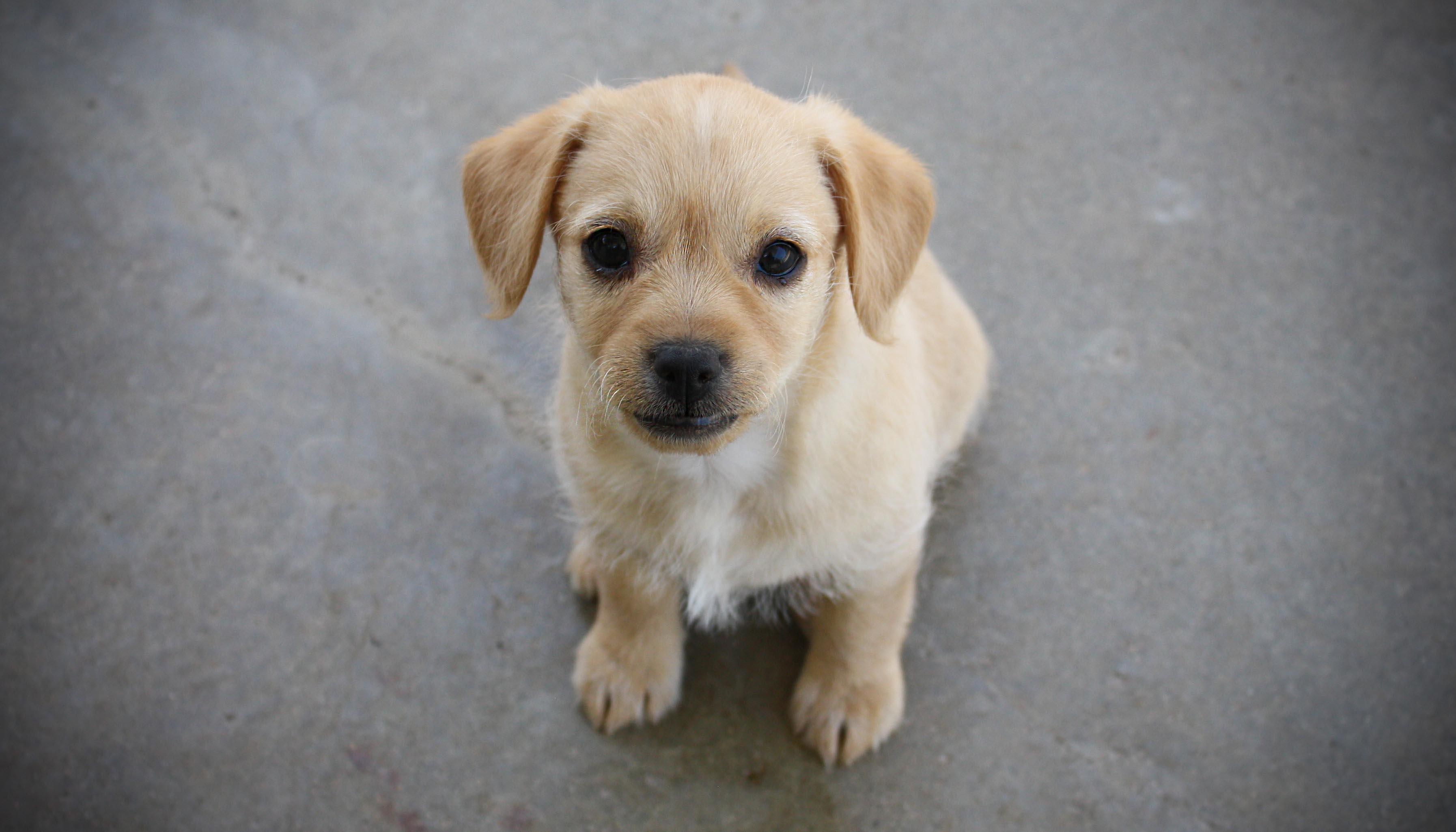 fdf.puppy.jpg