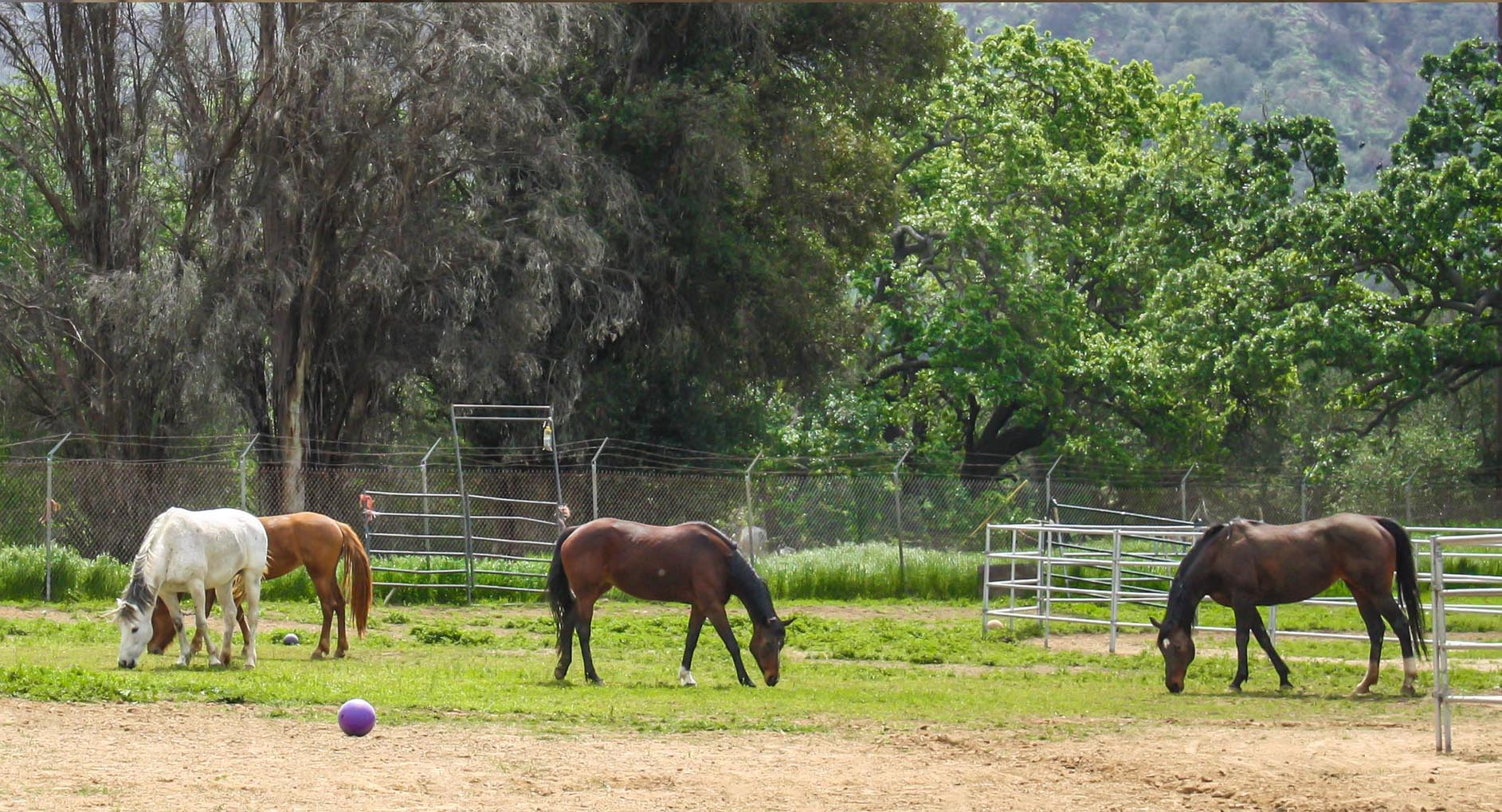 horses.fdf.jpg
