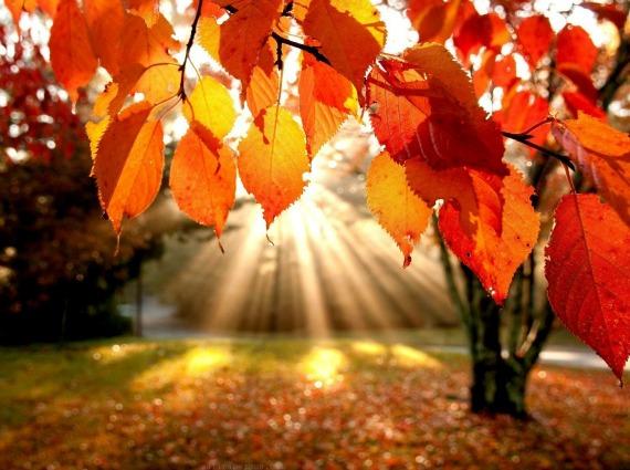 content_fall.jpg