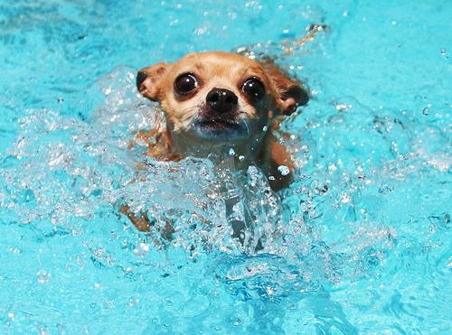 doggy-paddle.jpg
