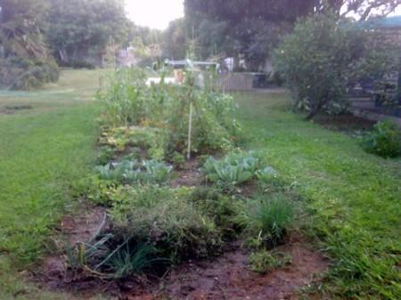 teaching_garden.jpg