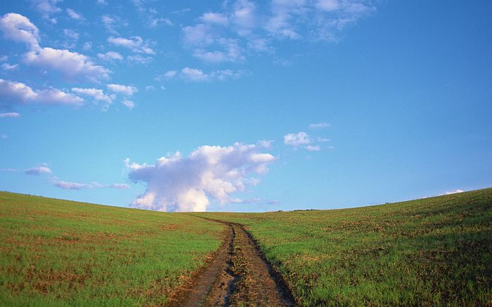 Country_Road_Field.jpg