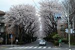 mitaka_small.jpg