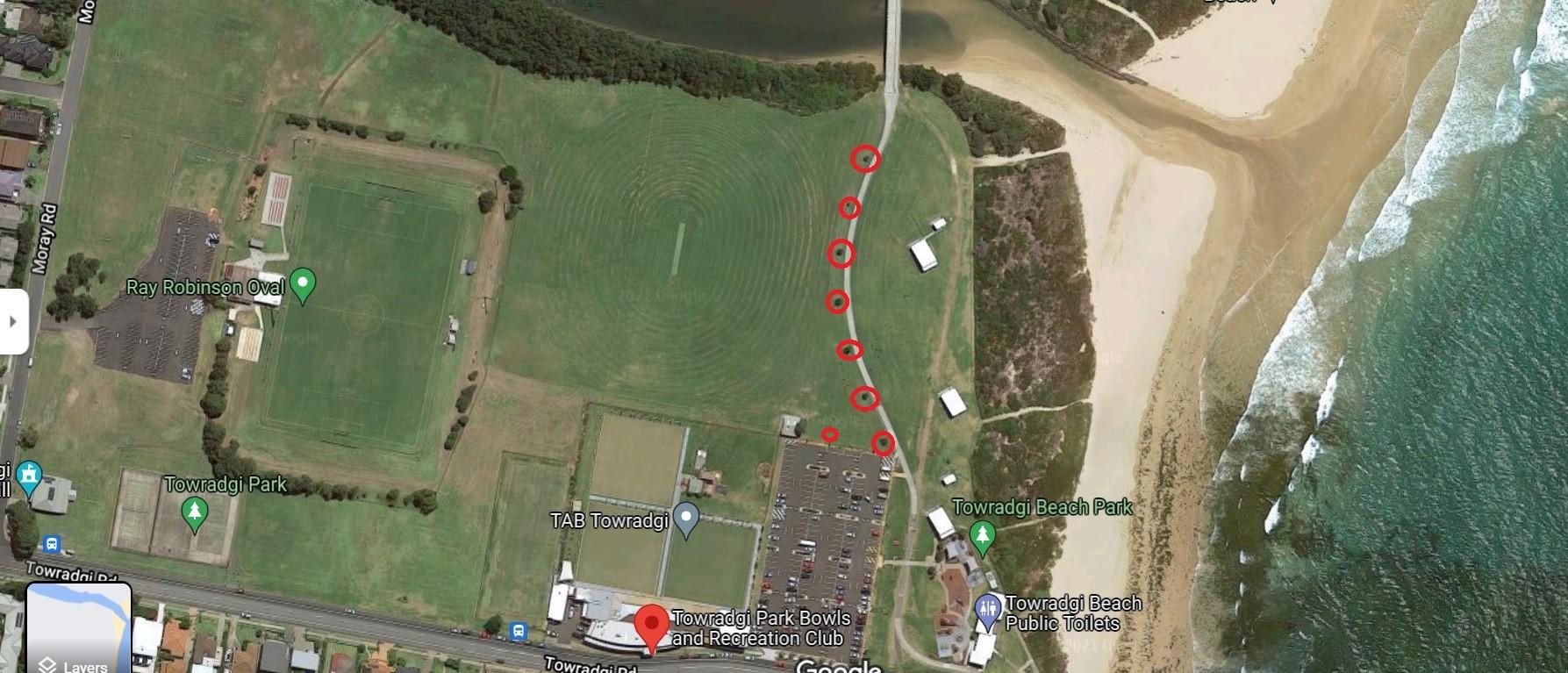 tree_aerial.jpeg