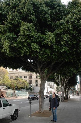 man_looking_at_tree.jpg