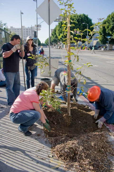 121111_TreePlanting_CRW_5490.jpg