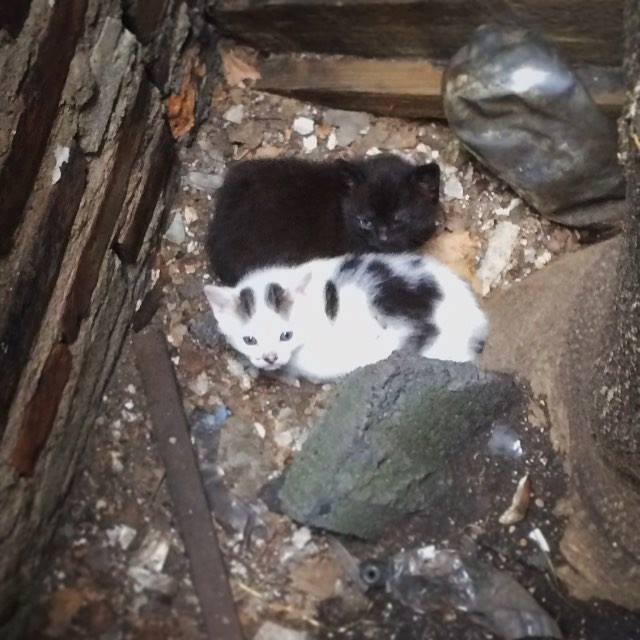 kitten_window_well2.jpg