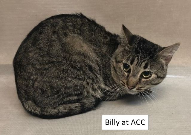 BillyatACClabel.JPG