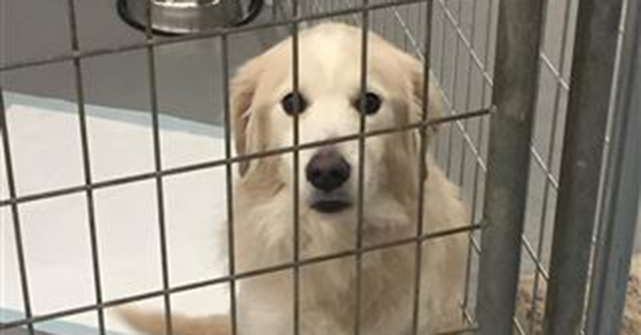 After Owner Dies, a Scared Dog is Taken to a Shelter—He