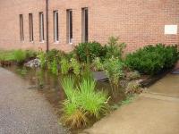 St_Martin_rain_garden_(200x150).jpg