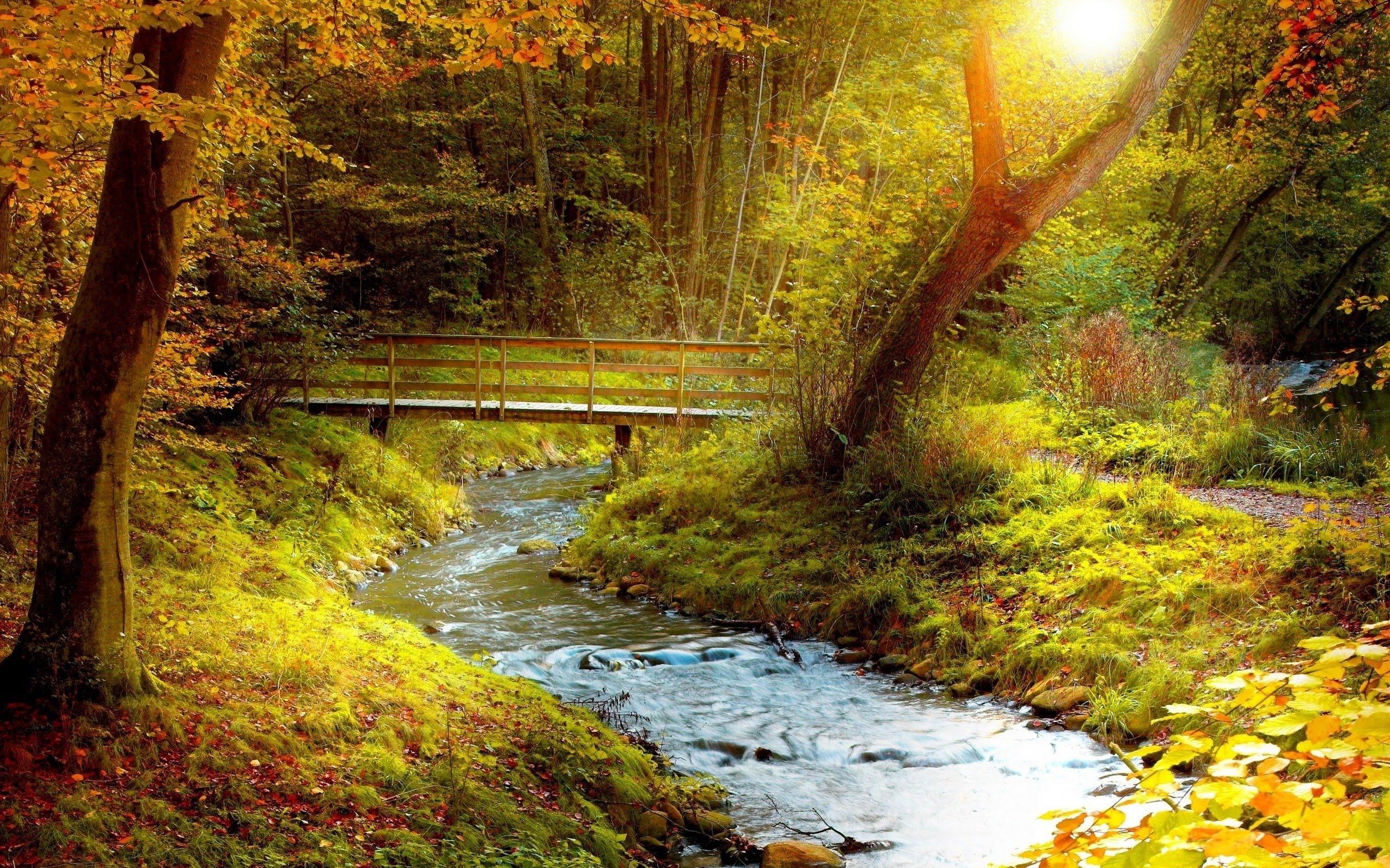 forest-stream-path.jpg