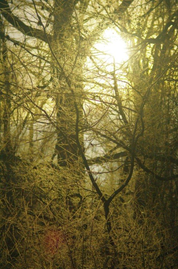 woodsandlight.jpg