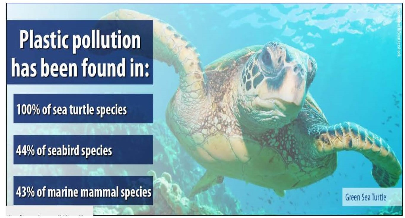 Plastics2pager_turtle.jpg