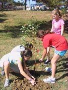 Tree_Planting_10_17_2010_042_opt.jpg