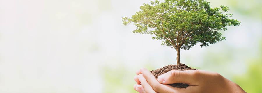En Güzel Hediye: Annenin Adını Bir Ağaca Ver!