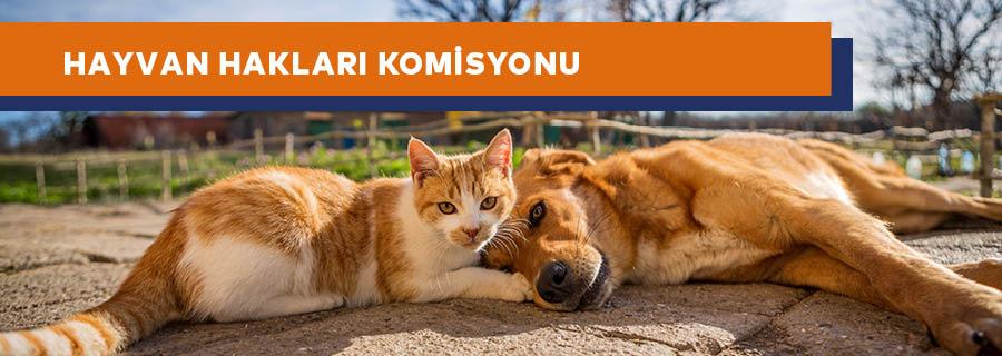Hayvan Hakları Komisyonu
