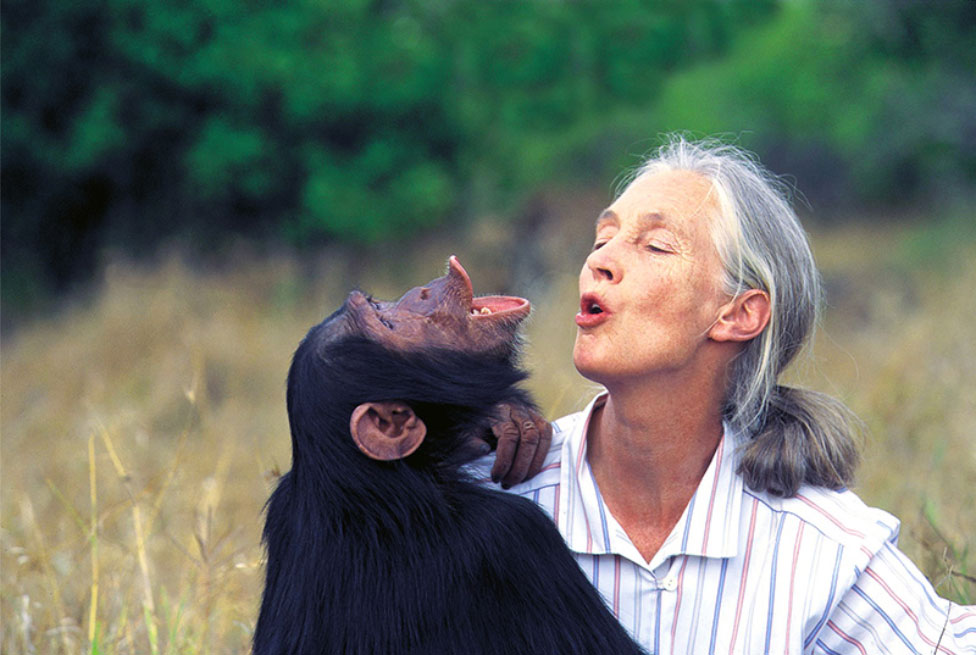 Jane and Chimp