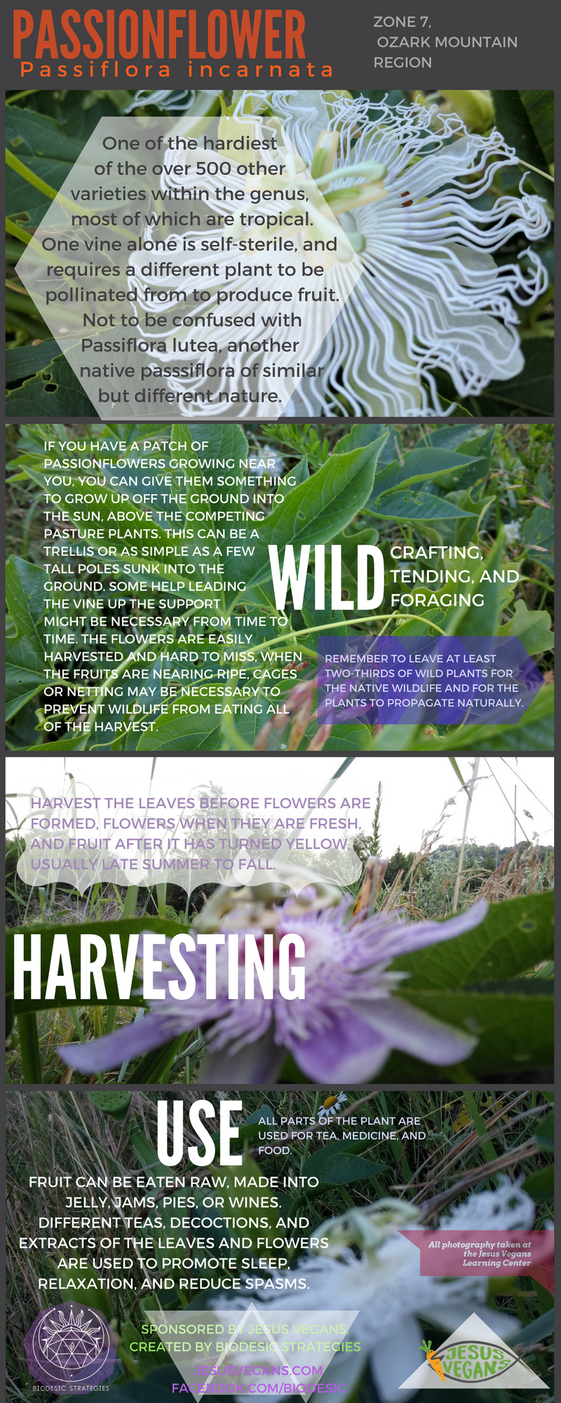 Passionflower_(1).png