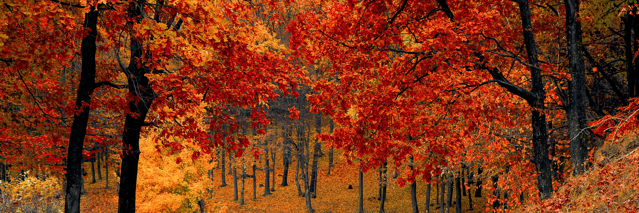 trees-fall-autumn-red-season-b.jpg