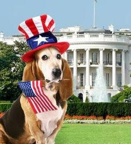 Basset_on_4th.jpg