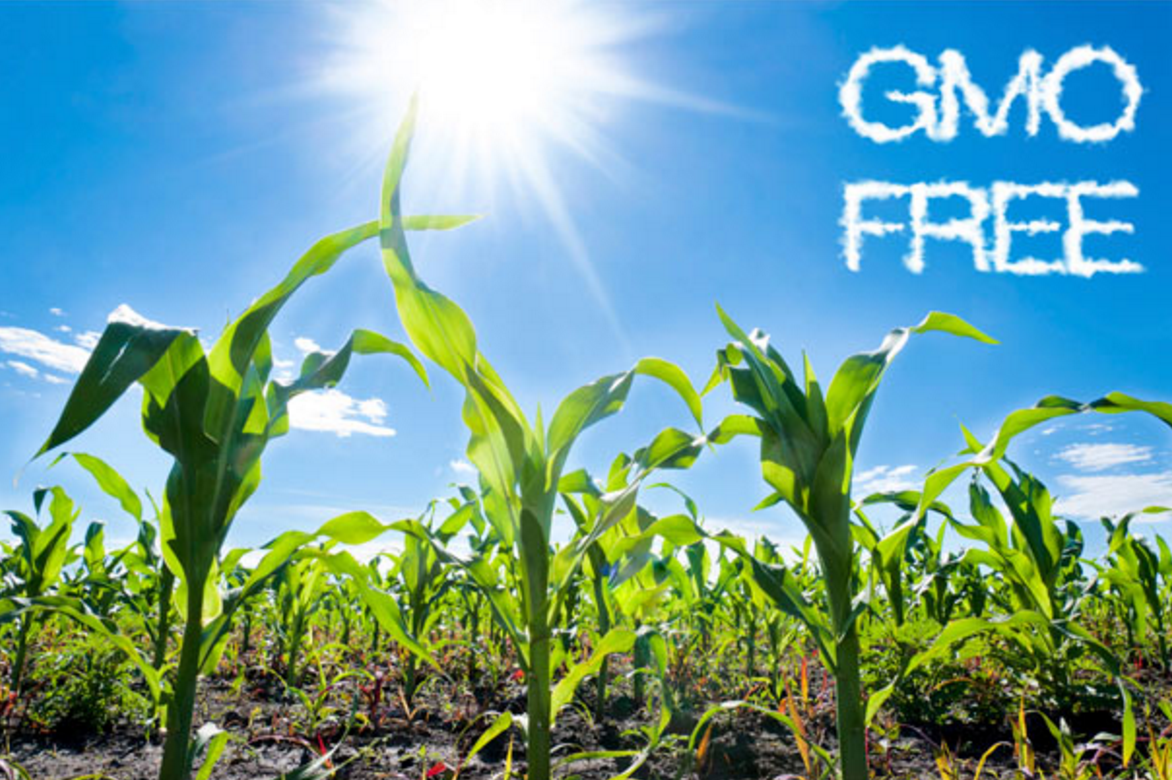 GMOfree1.png