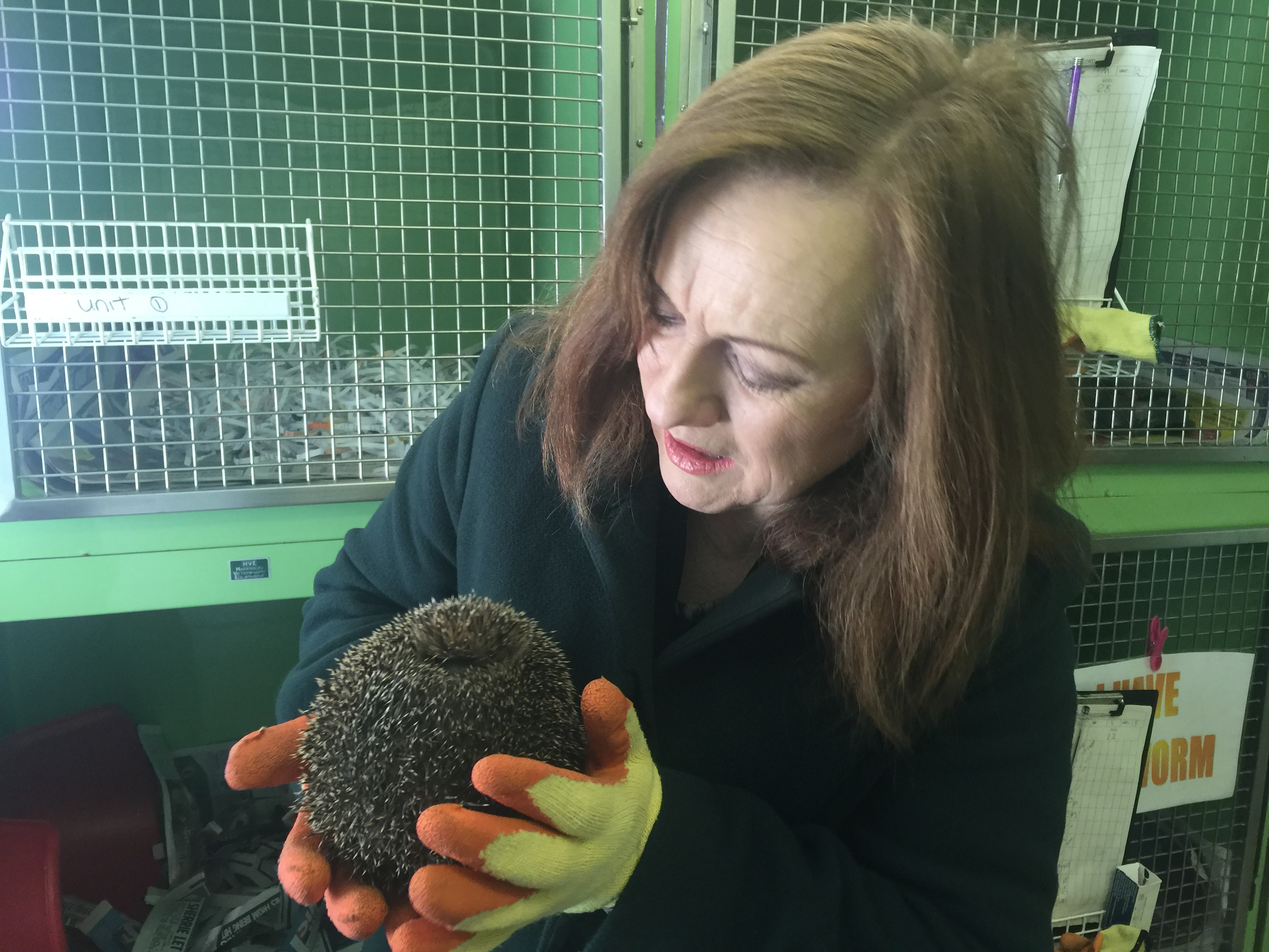 Joan_with_Harvey_the_Hedgehog.JPG