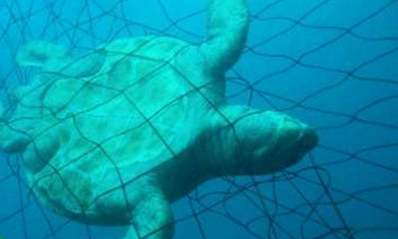 Say No to Shark Nets in NSW - Justin Field