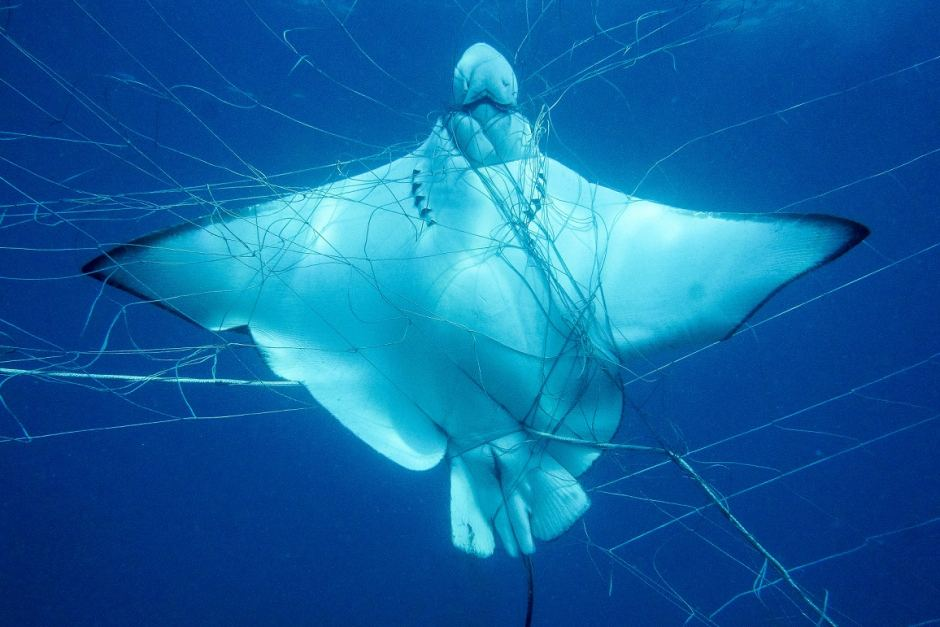 Shark nets should be hauled up for good in NSW: Greens