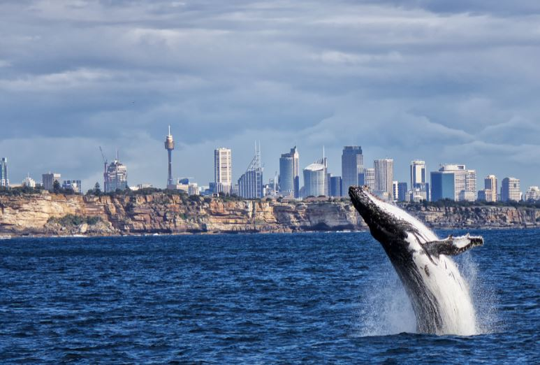 Media Release: Greens congratulate community on pushing NSW Govt into consultation on new marine protected areas  - Justin Field