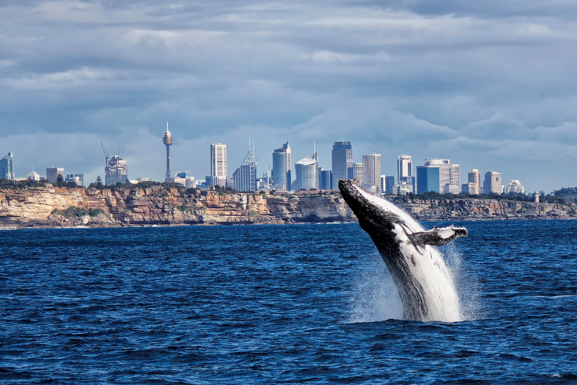 NSW Govt backflip on Sydney Marine Park would risk healthy future for oceans and marine life