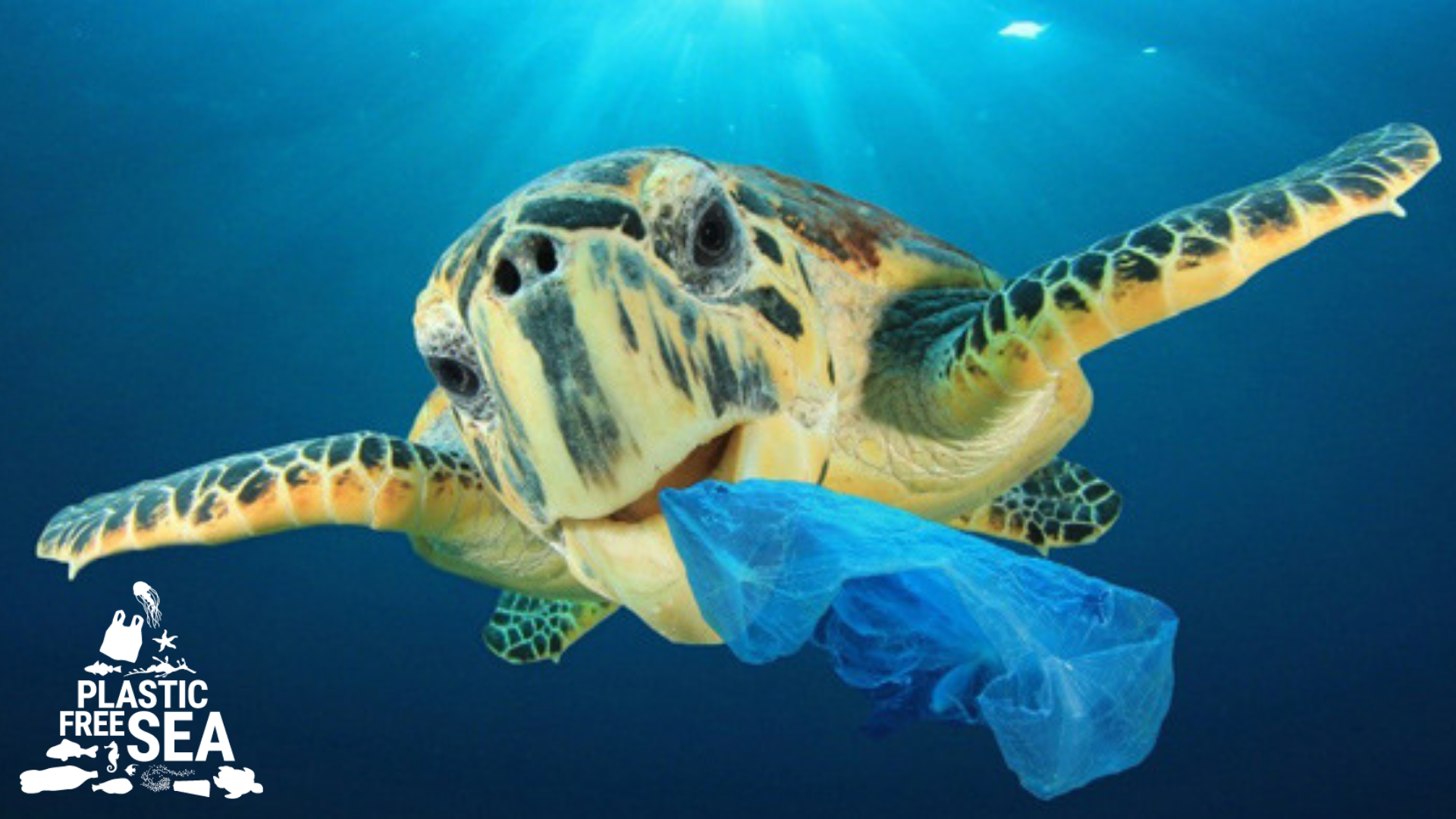 turn the plastic tide: Greens call for end to single-use plastics