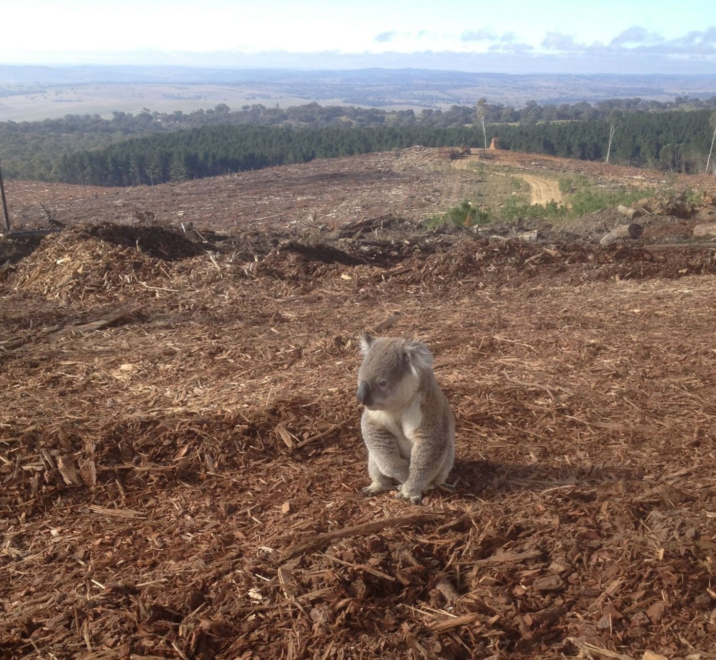 Alarming NSW land clearing rates calls for action to protect forests