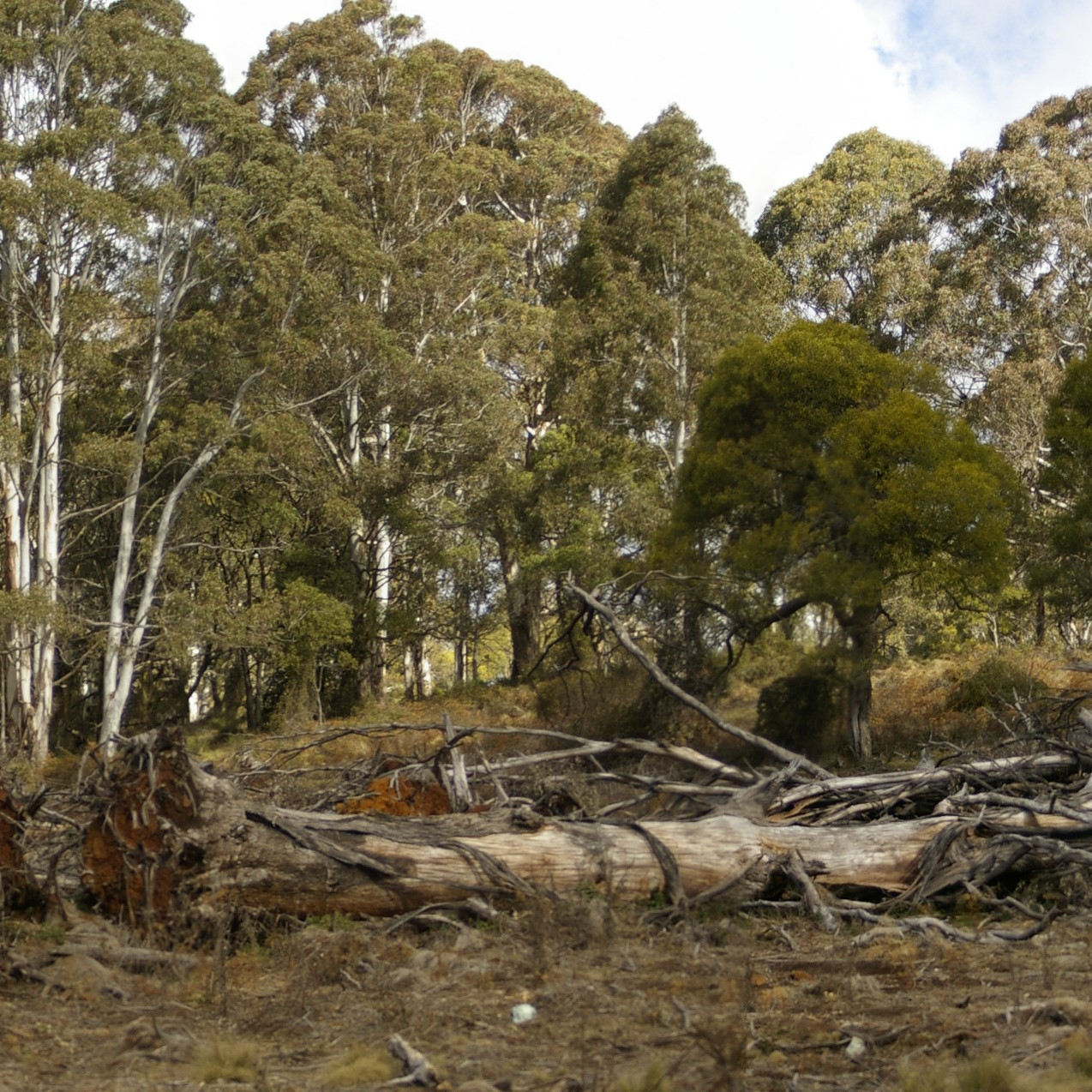 Land clearing should be paused until Government responds to damning Auditor-General report