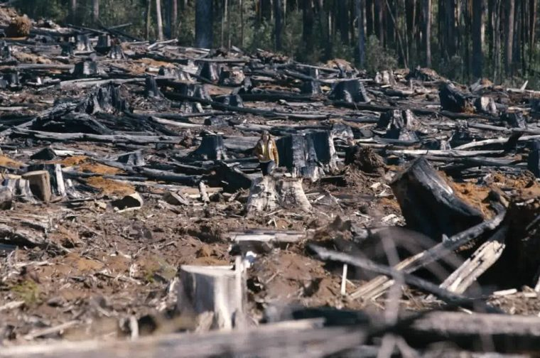 National Party continues legacy of deforestation and destruction across NSW