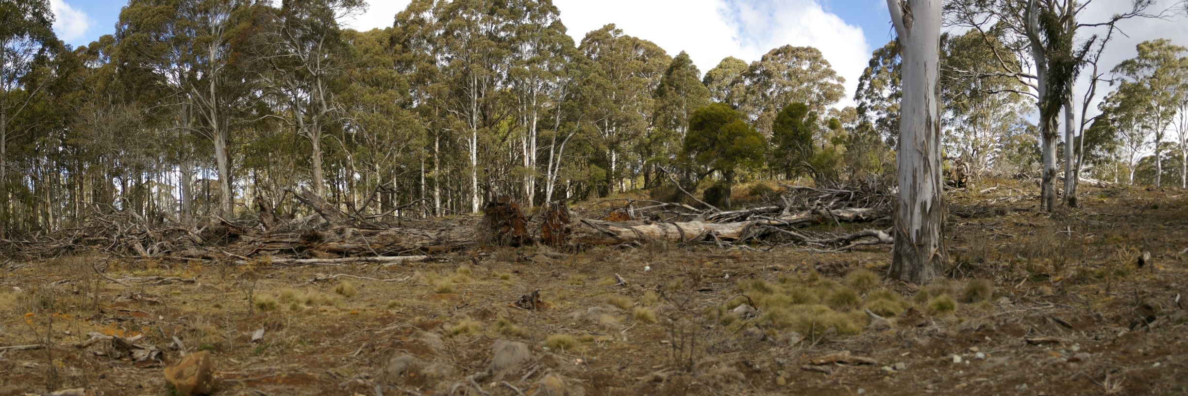 Berejiklian Government approves anti-science land clearing response to bushfire inquiry and opens the door to further clearing of Koala habitat