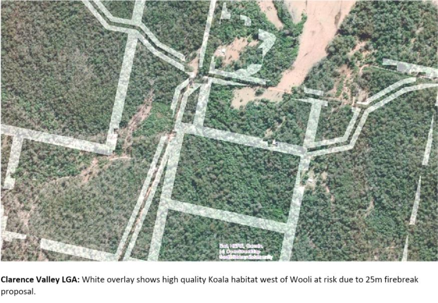 New 25m land clearing rule threatens tens of thousands of hectares of North Coast Koala habitat