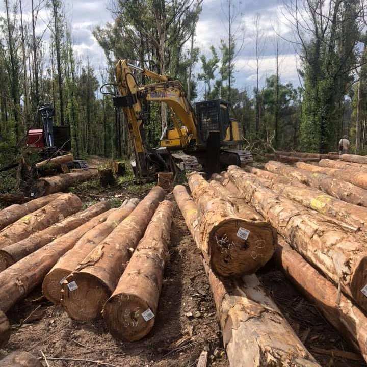 Independent review into logging burnt forests must mean no new logging until review finalised