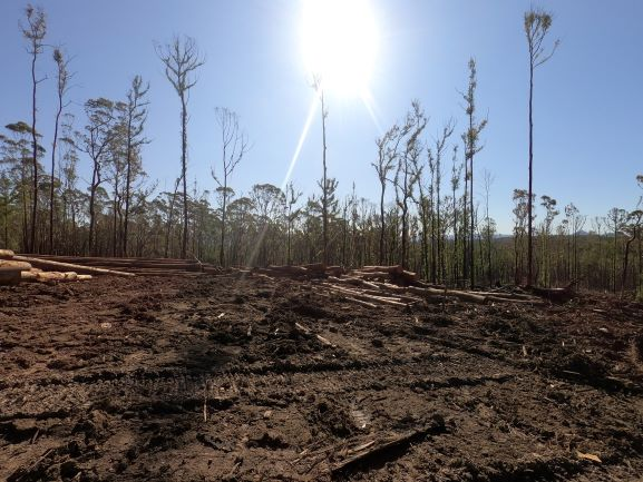 Forestry Corporation restarts logging on NSW South Coast against EPA advice