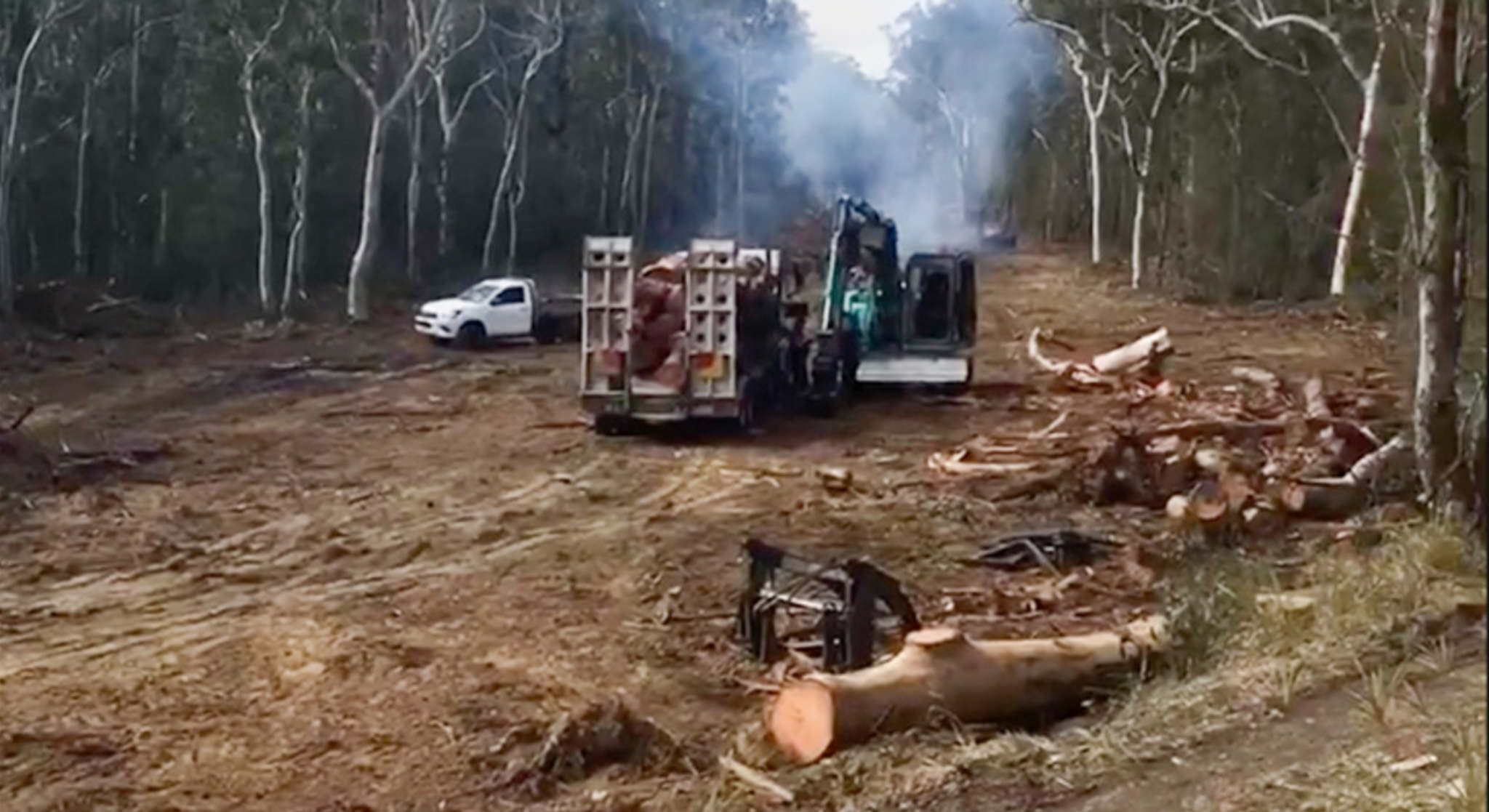 NSW Government bushfire tree clearing rules risk widespread environmental destruction and worsening bushfire risks