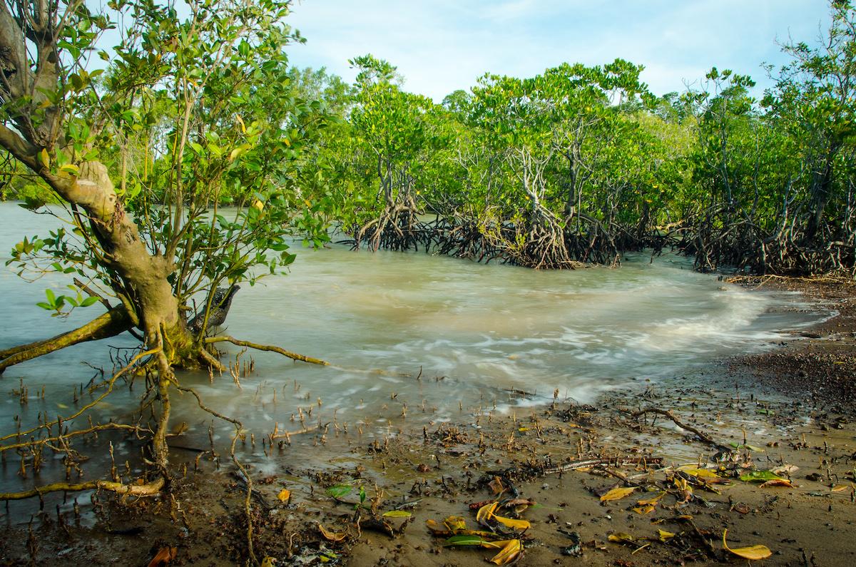 mangrove_dogooder.jpg