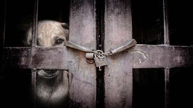 Dog-In-Cage.jpg