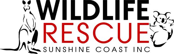 wildlife_rescue_sunshine_coast.jpg
