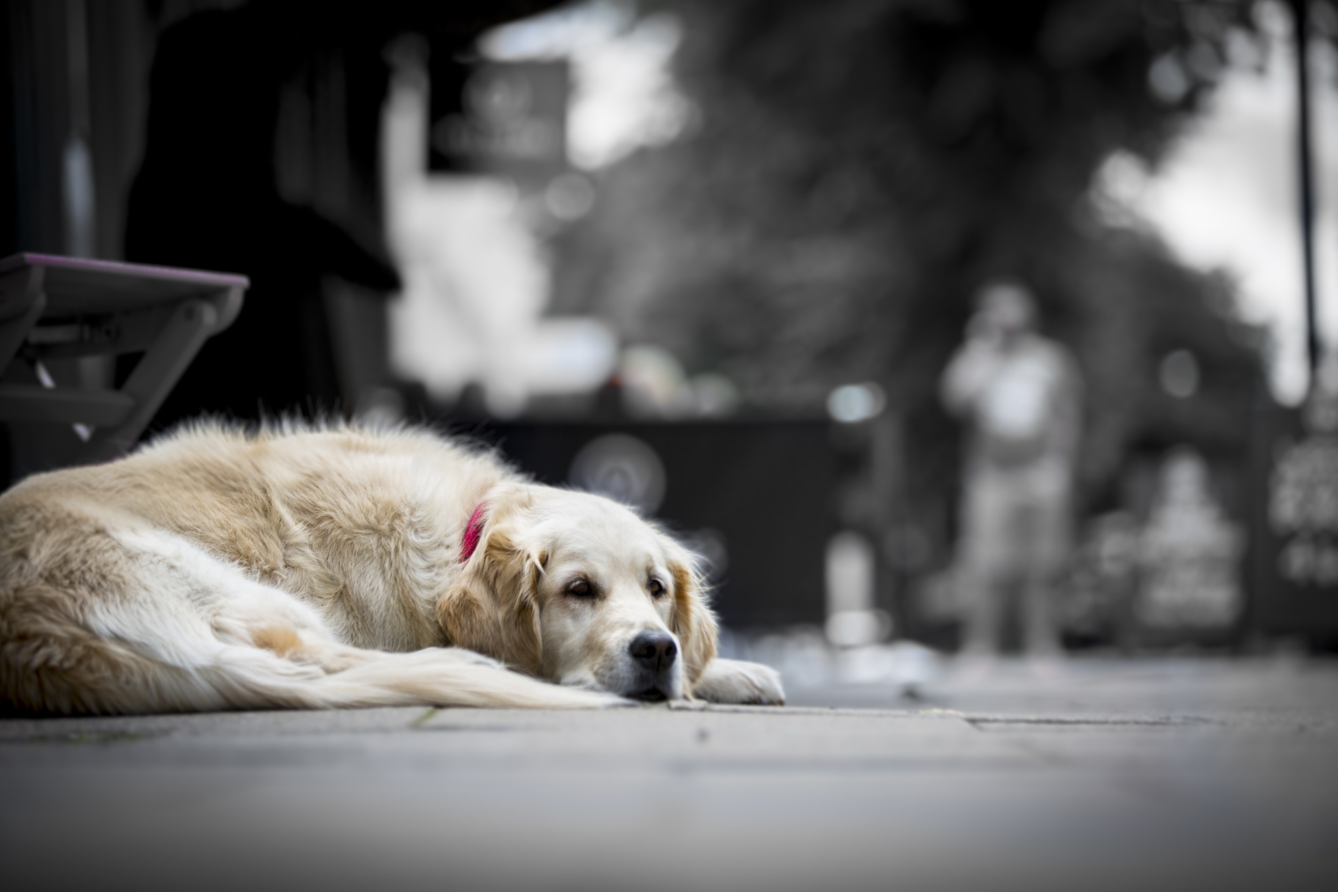 Sad_Dog.jpg