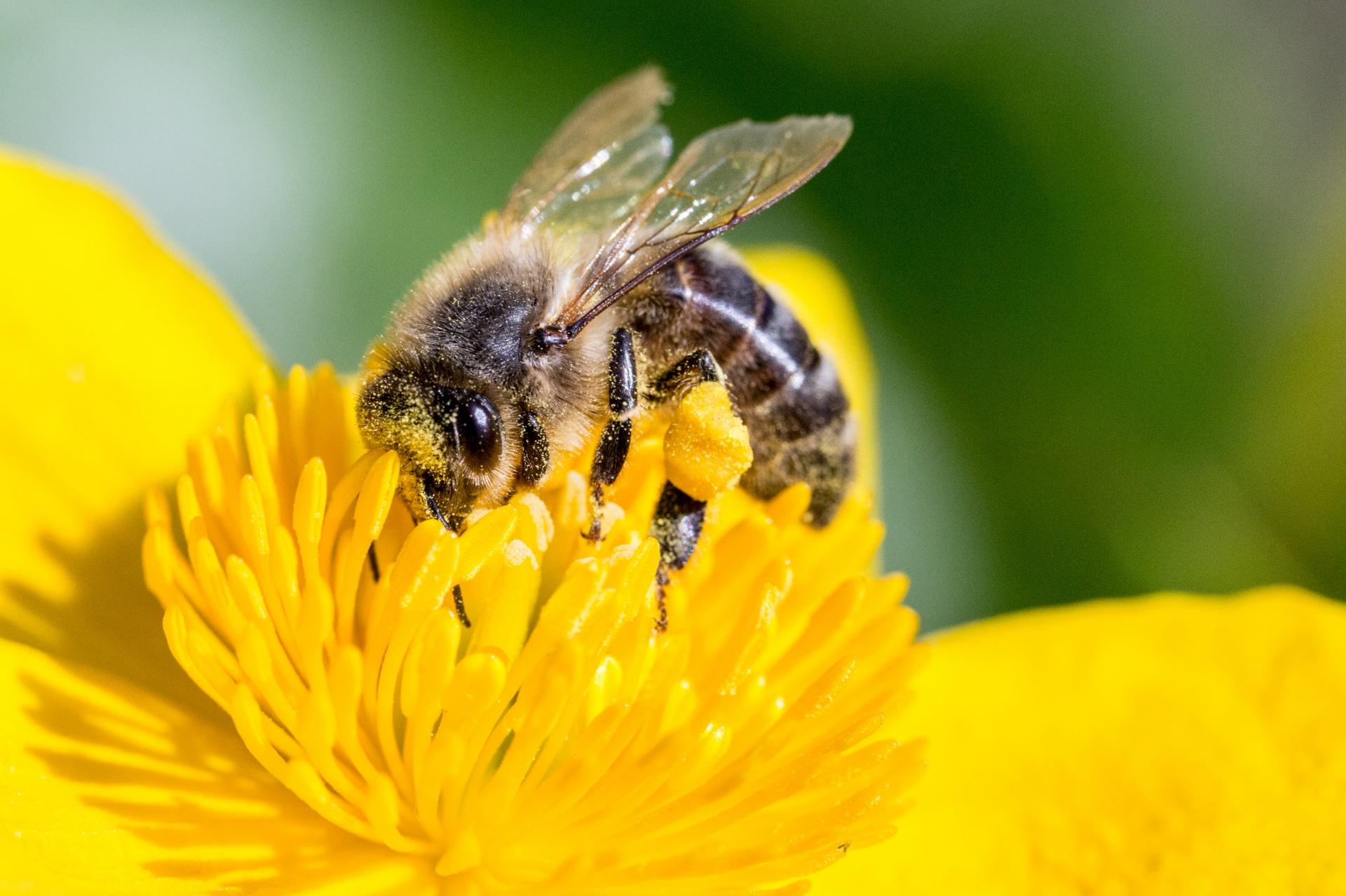 Bee_Again.jpg