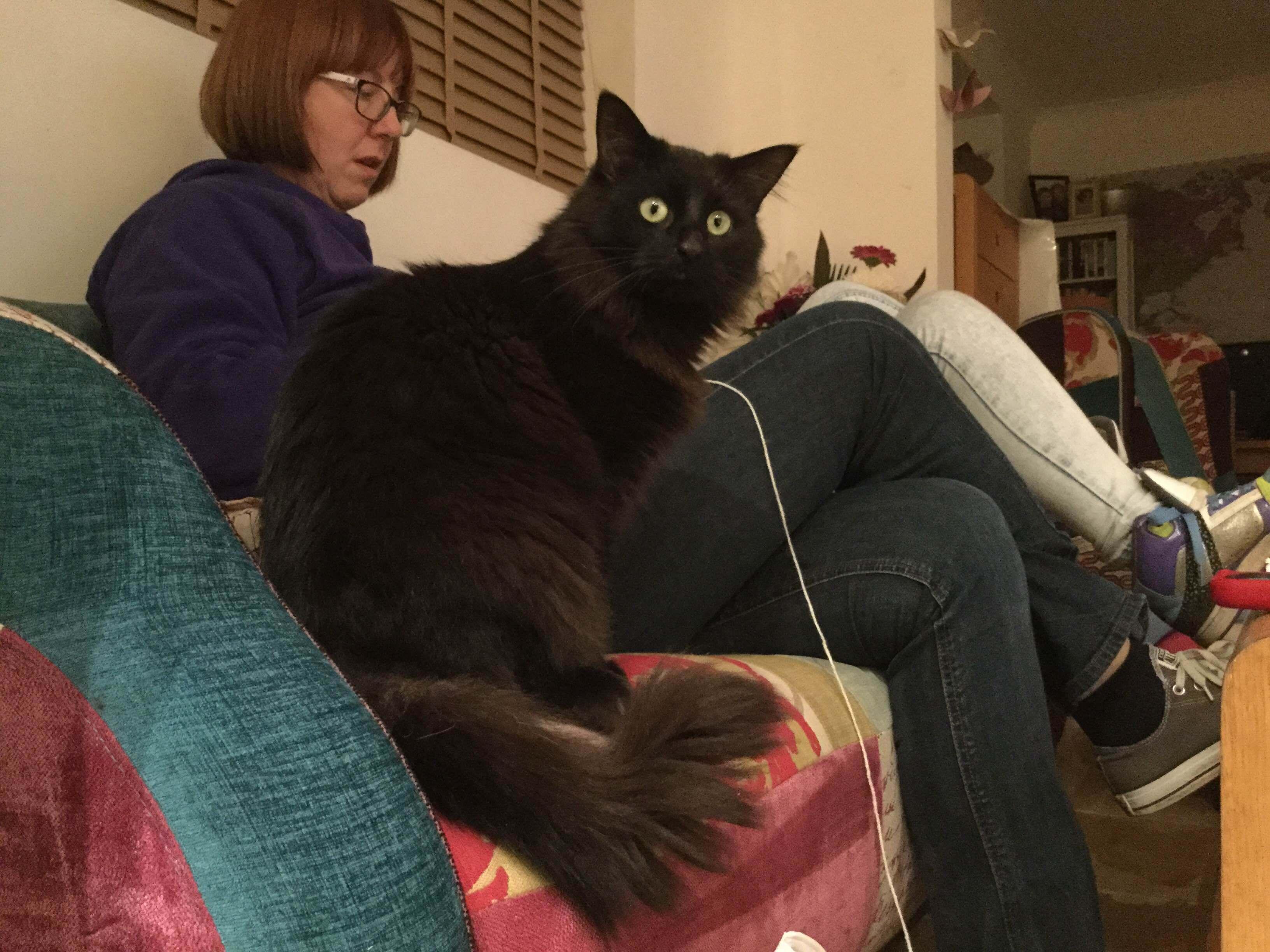 Jackson the cat with Caroline Esterson