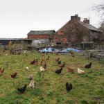 Burgess Farm