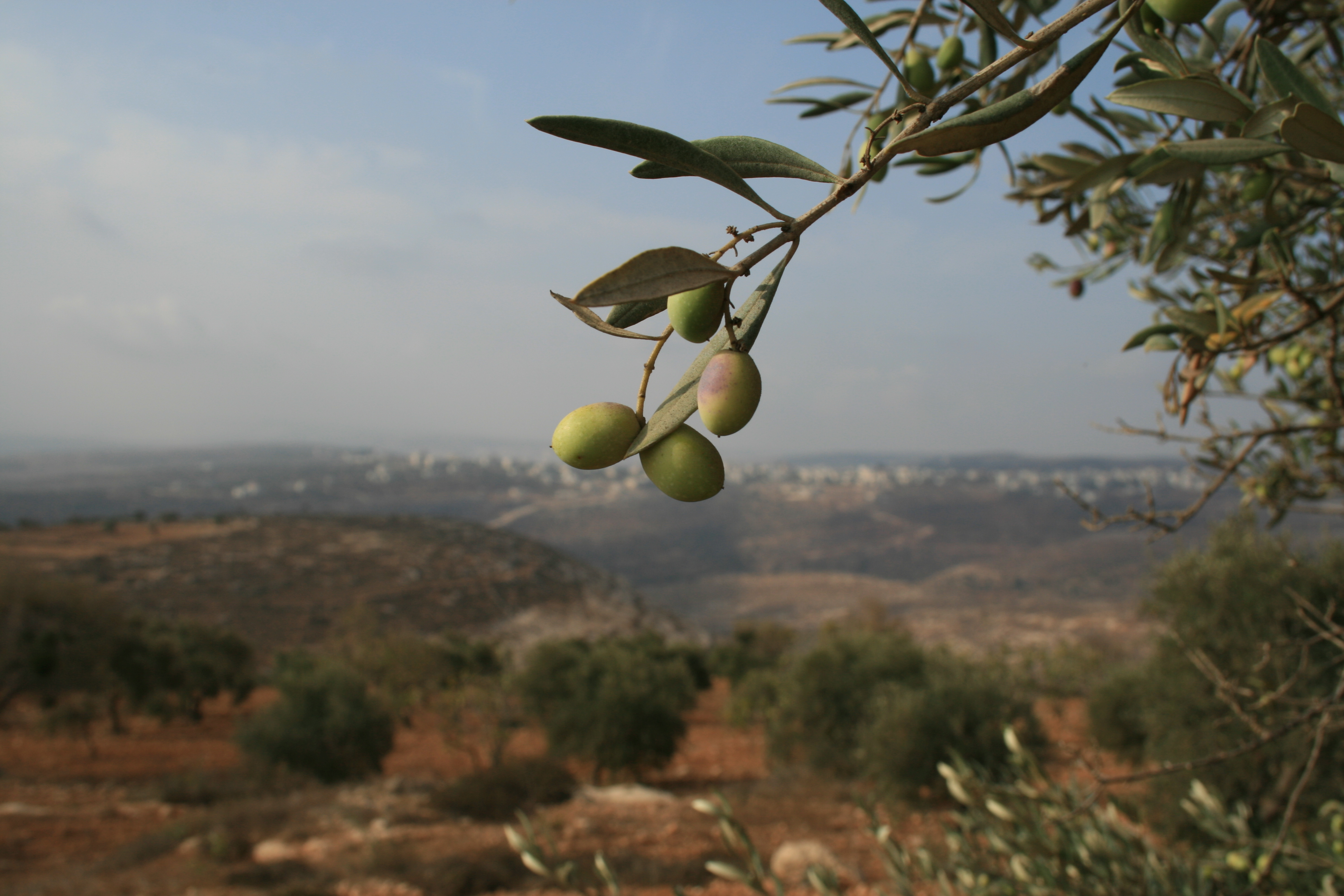 palestine-14-october-2007-076.jpg